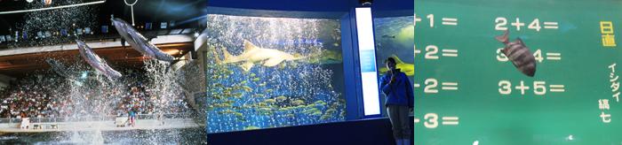 マリンパークの海の生き物たちのパフォーマンスショー