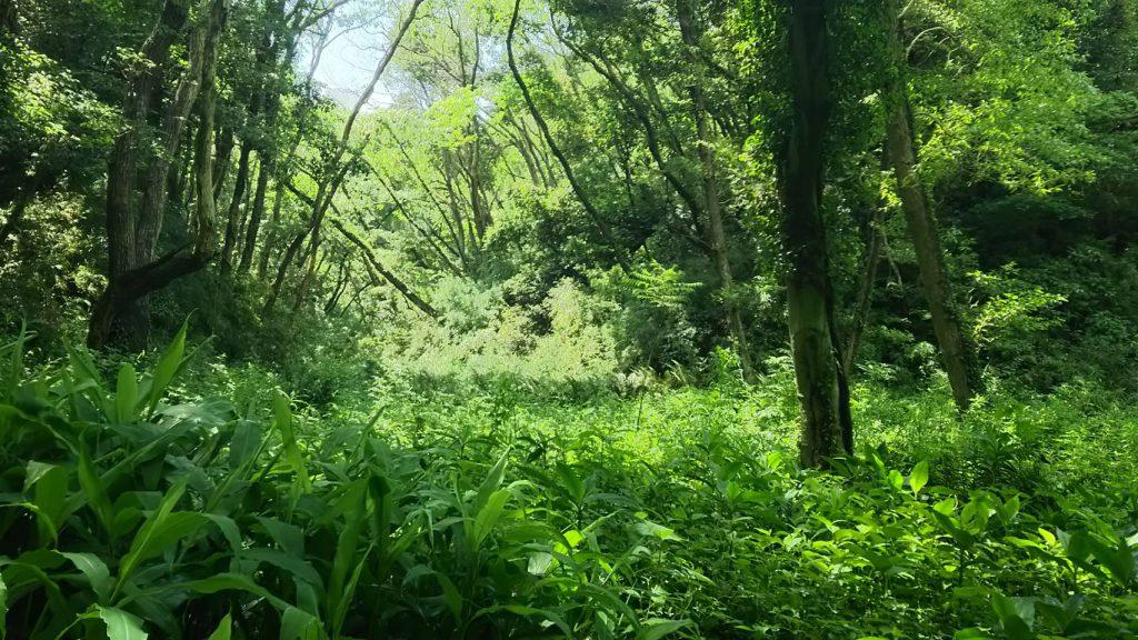 神秘的な小網代の森
