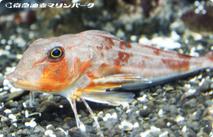 水族館の魚